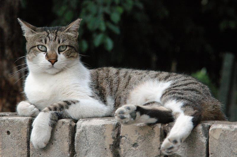 улица кота стоковые изображения rf