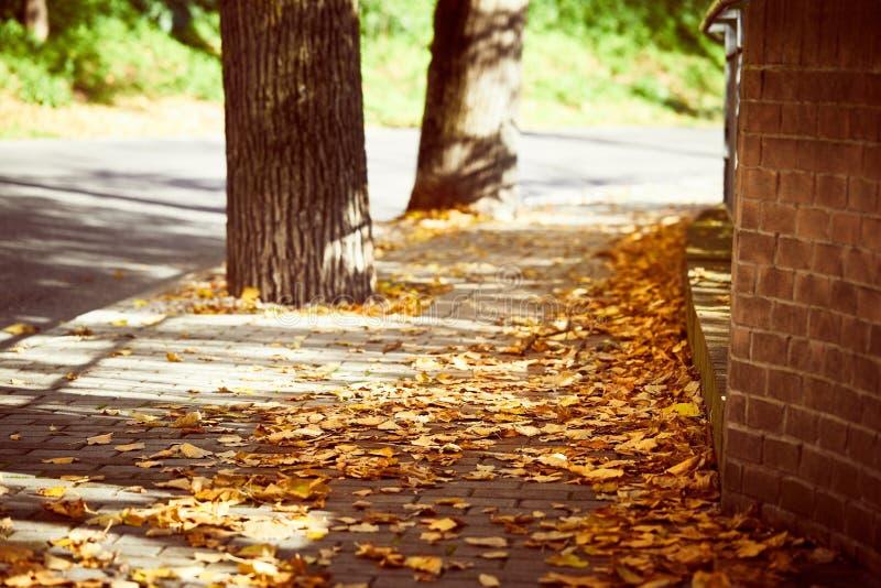 Улица осени с лист и деревьями тротуара золотыми стоковая фотография rf