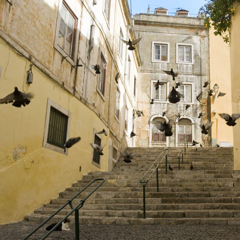 улица lisbon стоковое изображение