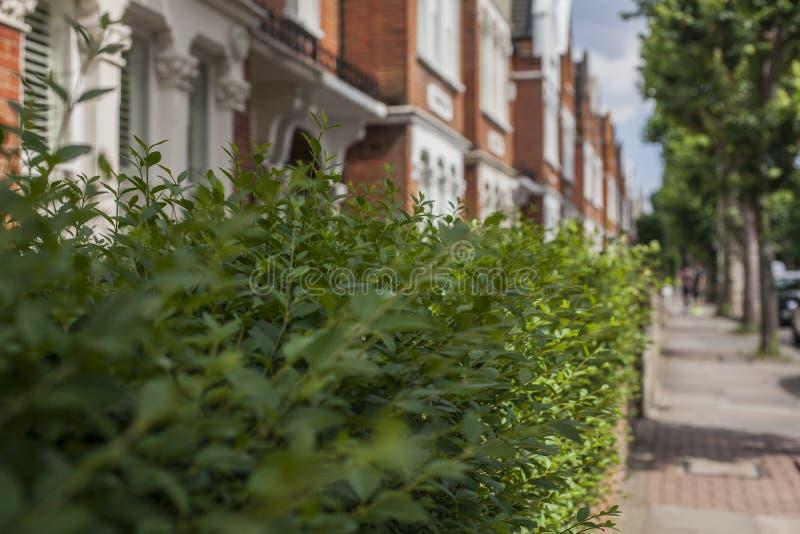 Улицы в Лондоне - зеленые кусты вдоль улицы стоковое фото rf