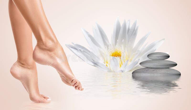 Улучшите женские ноги в воде с цветком лотоса Принципиальная схема спы стоковые изображения rf