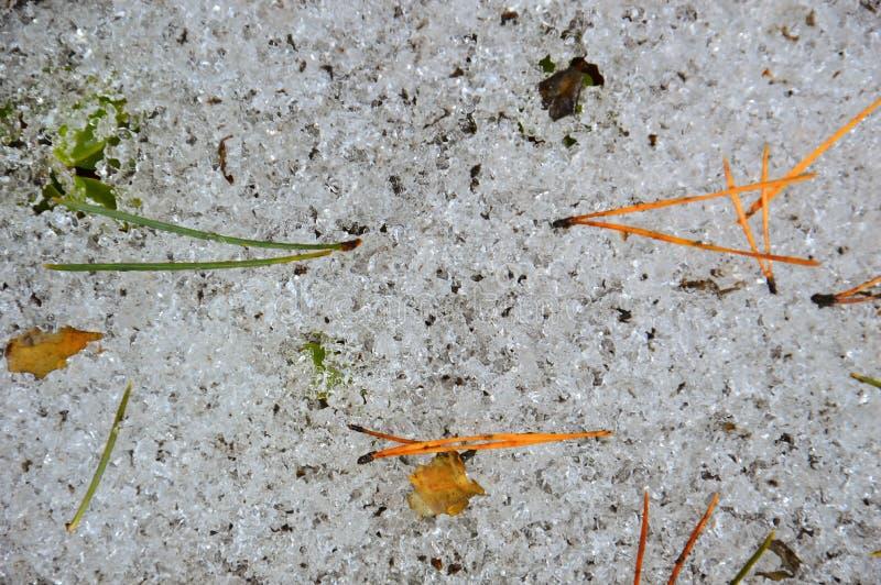 Улыбка весны Расплавленные иглы и листья сосны сформированы в форму улыбки стоковые фотографии rf