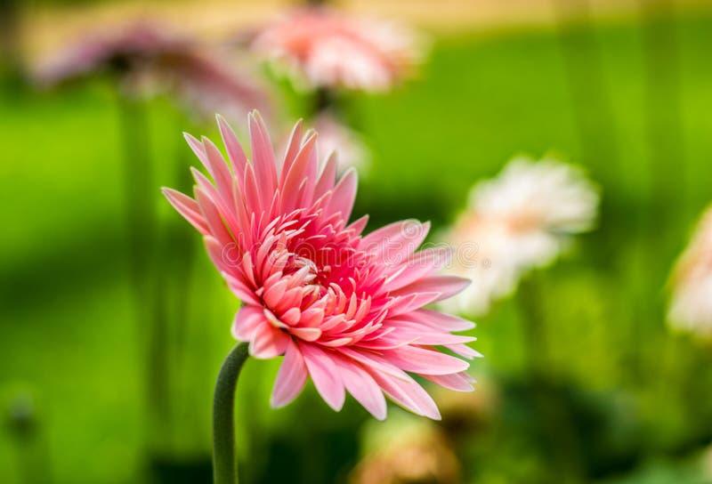 Улыбка цветения лета стоковое изображение