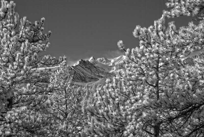 Ультракрасное изображение скалистых гор вне Больдэра, Колорадо стоковые изображения rf