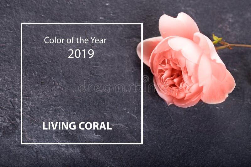 Ультрамодный творческий коллаж в живя цвете коралла года 2019 стоковые фото