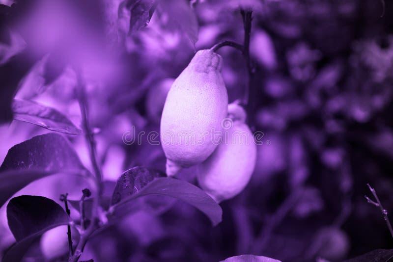 Ультрафиолетовый луч 2018 тенденции Pantone, абстрактная предпосылка стоковое изображение