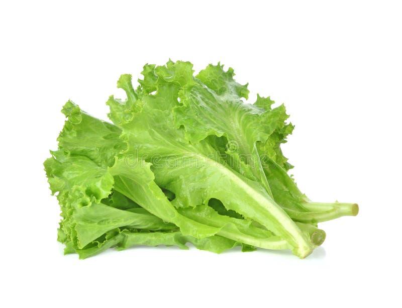 Умаслите головной салат, хрустящую голову, айсберг изолированный на белом backgro стоковые изображения rf