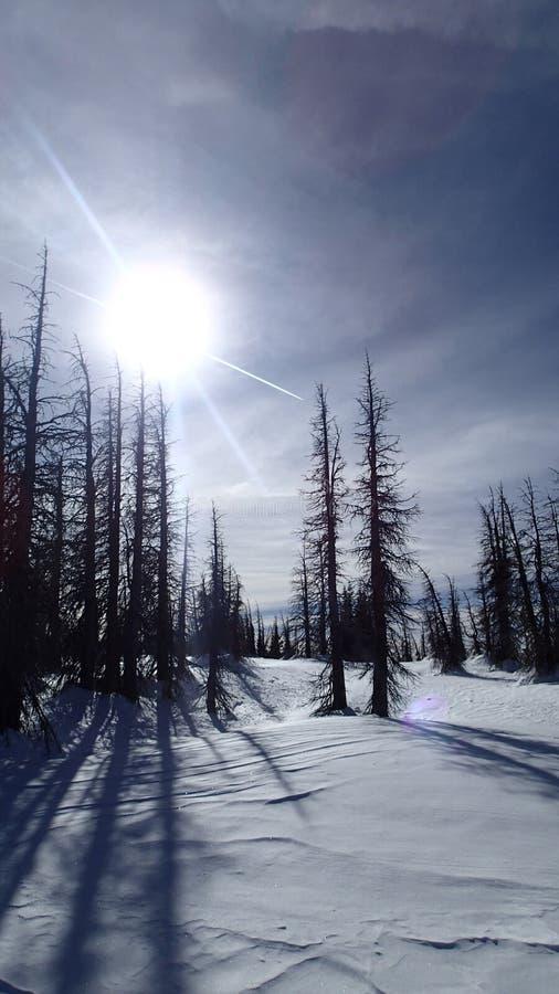 Умершие леса зимы стоковые фотографии rf