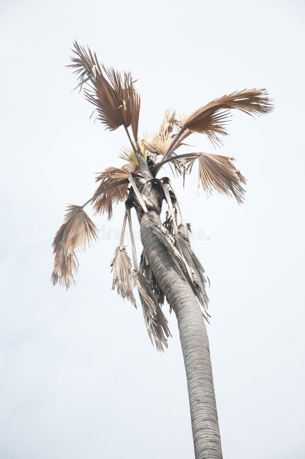 Умирая пальмы стоковые изображения rf