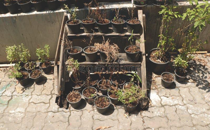 Умирая цветки заводов в черных пластичных баках плантатора на день старой деревянной полки солнечный в саде задворк стоковая фотография rf