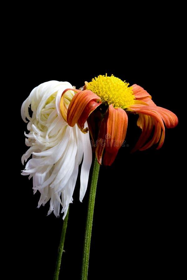 умирая цветок стоковое фото rf