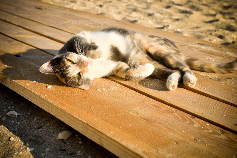 Умиротворятьый кот лежа на пляже стоковая фотография rf