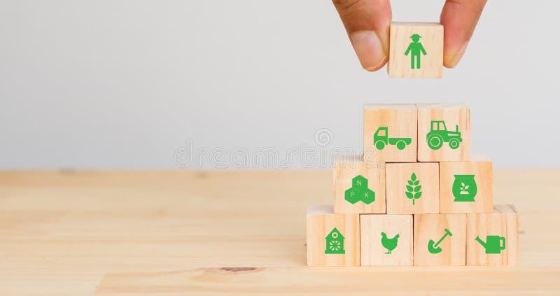 Умная концепция технологии фермы или земледелия футуристическая, человек руки положила значок соединяется, значок включая фермера стоковые изображения rf