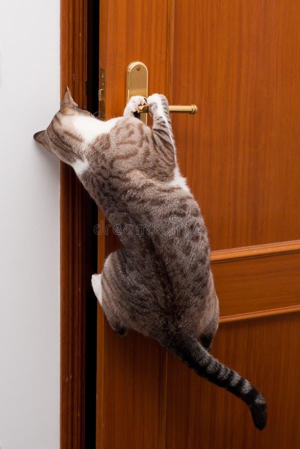Умный кот стоковые изображения rf