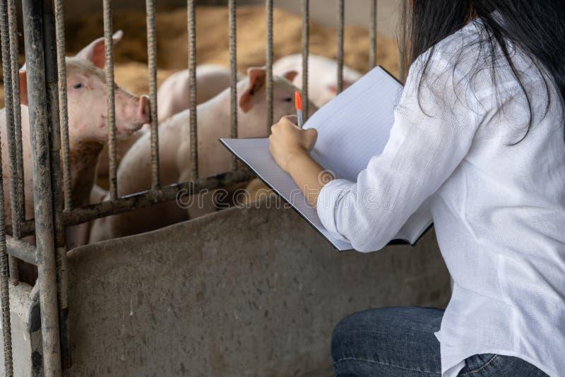 Умный фермер с записями для проверки качества в руках в органическом фермерском свинье Сельское хозяйство и животноводство стоковые изображения
