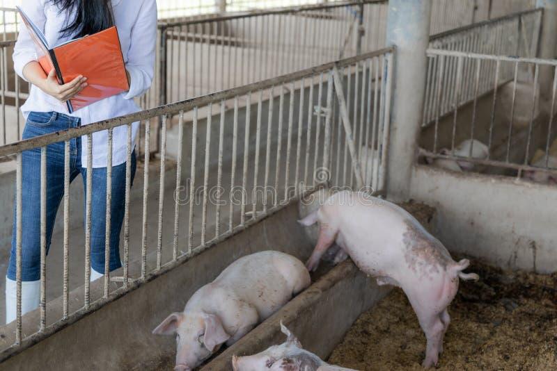 Умный фермер с записями для проверки качества в руках в органическом фермерском свинье Сельское хозяйство и животноводство стоковое изображение