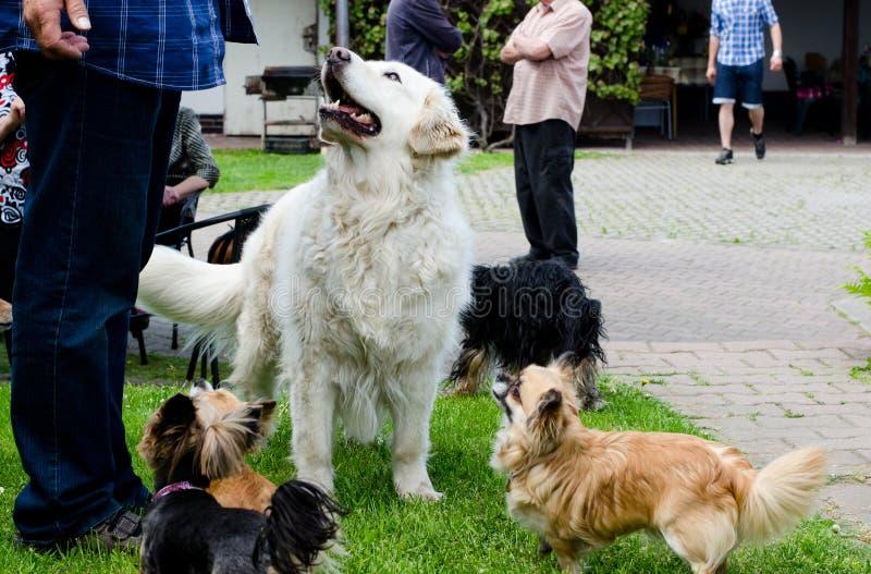 Умолять собакам стоковое фото rf