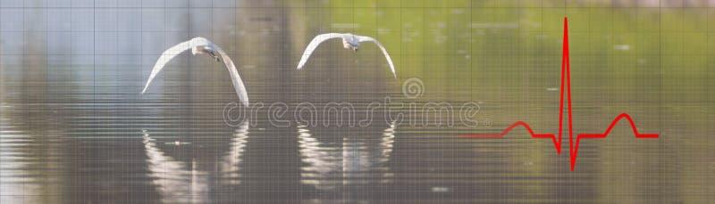 Умственная концепция здоровья, анти- концепция терапией стресса Природа стоковая фотография rf