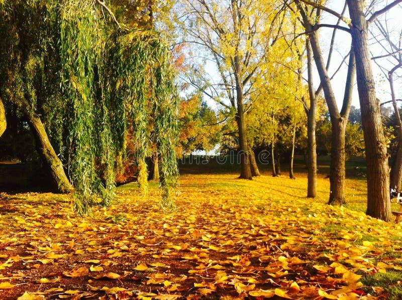 Университет парка Essex стоковая фотография