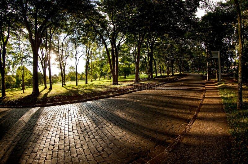 Университет Сан-Паулу в Ribeirao Preto - Бразилии Июль 2017 стоковое фото rf