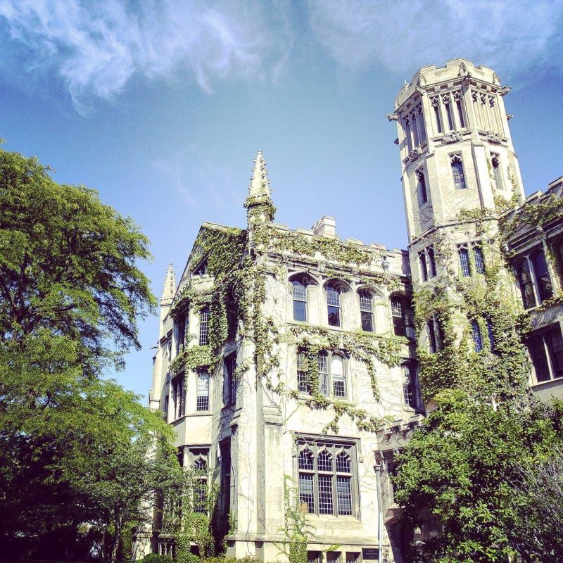 университет chicago здания стоковые изображения