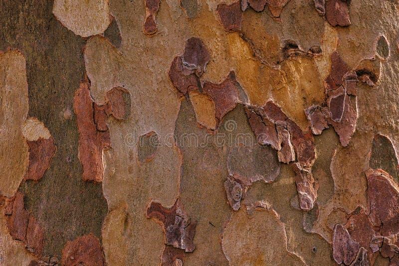 Уникальная деревянная текстура, покрашенная кора стоковые изображения