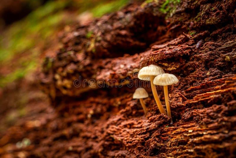 Уникальные дикие грибы на пне леса стоковое изображение