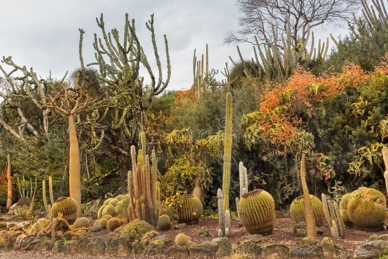 Уникальные кактусовые сады отображают различные пустынные растения и кактусы Красивые туристические экзотические достопримечатель стоковое изображение rf