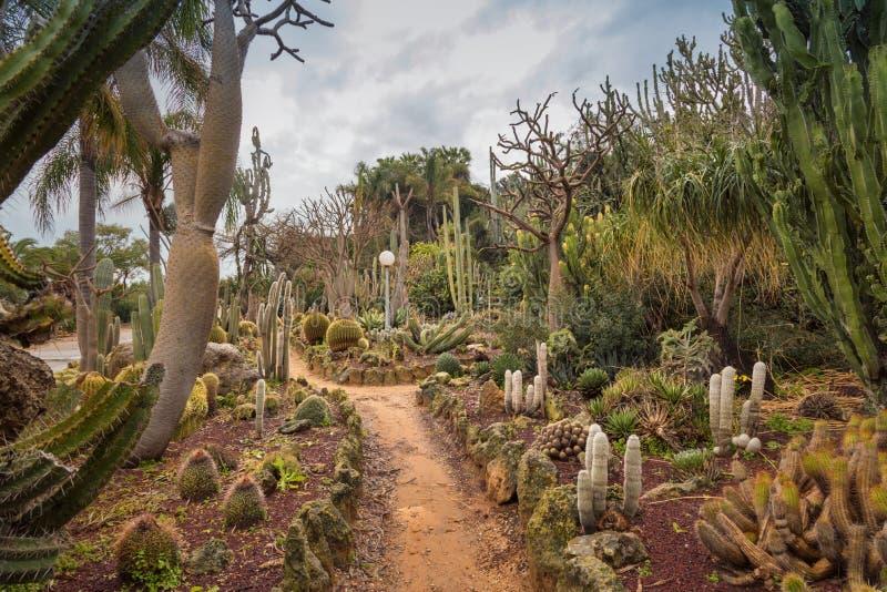 Уникальные кактусовые сады отображают различные пустынные растения и кактусы Красивые туристические достопримечательности Израиля стоковые изображения
