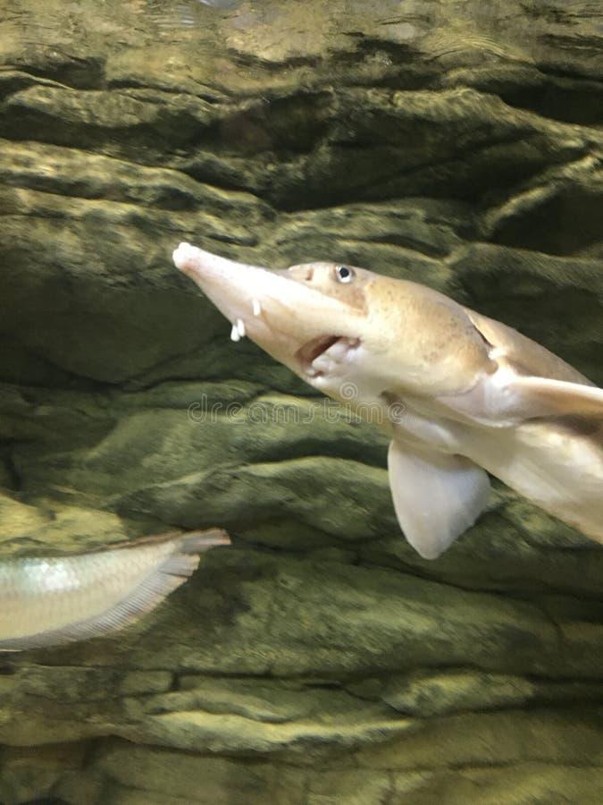 Уникальный вид акулы стоковые изображения