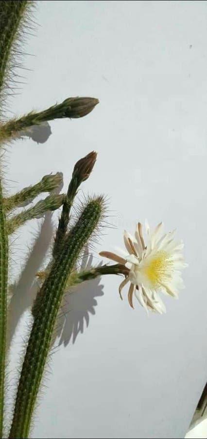 Уникальный цветок в природе стоковое изображение
