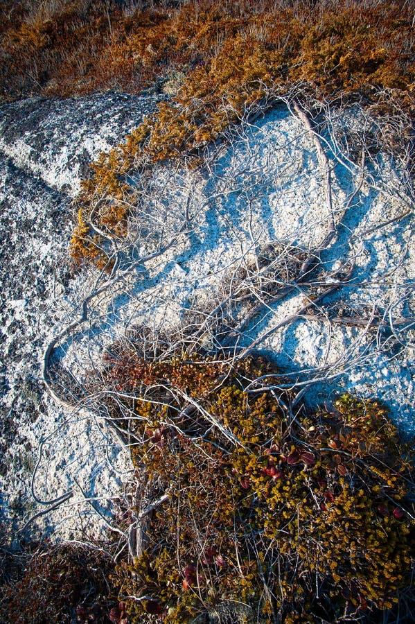 Уникально геология прибрежной Новой Шотландии стоковое фото