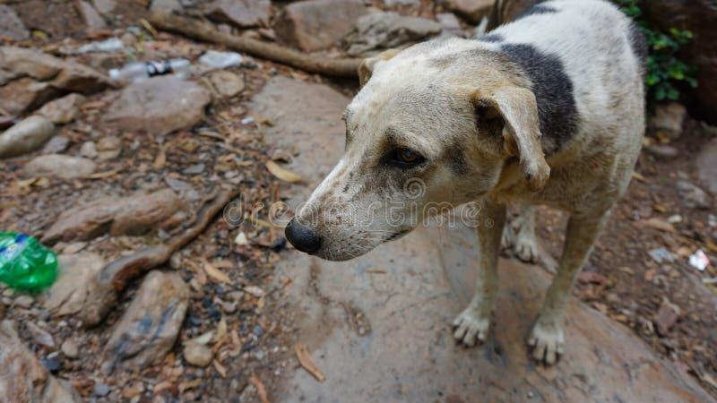 Унылые собаки улицы стоковые фотографии rf