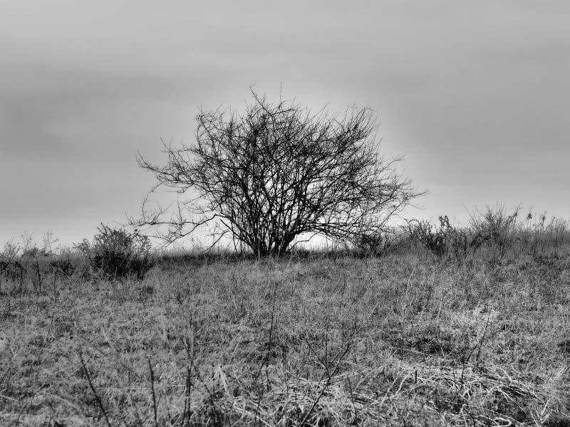 Унылый горный склон с обнаженными Бушем и засорителями стоковое фото rf