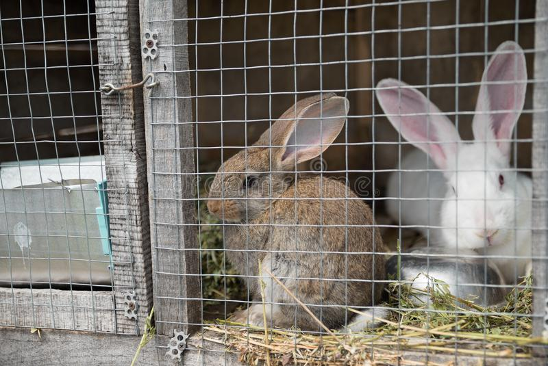 2 унылых зайчика смотря через рамку провода металла клетки стоковые фото