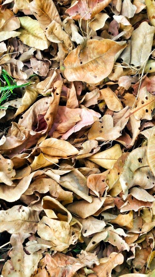 Унылая зима листьев стоковое фото rf