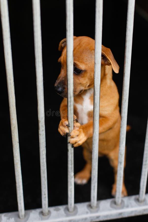 Унылая собака в клетке стоковые фотографии rf