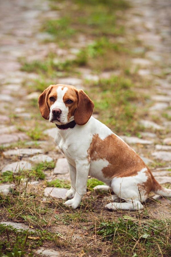 Унылая собака сидит самостоятельно на улице стоковое фото