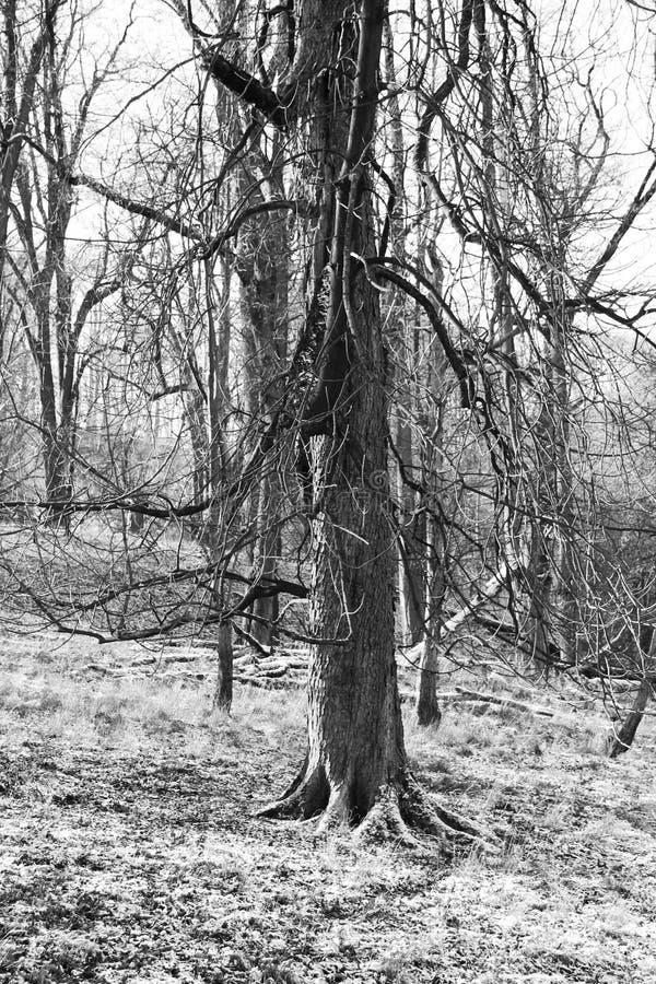 Унылое дерево стоковая фотография rf