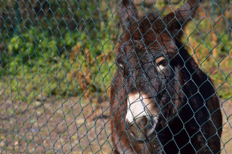 Унылое животное смотря вне стоковое изображение rf