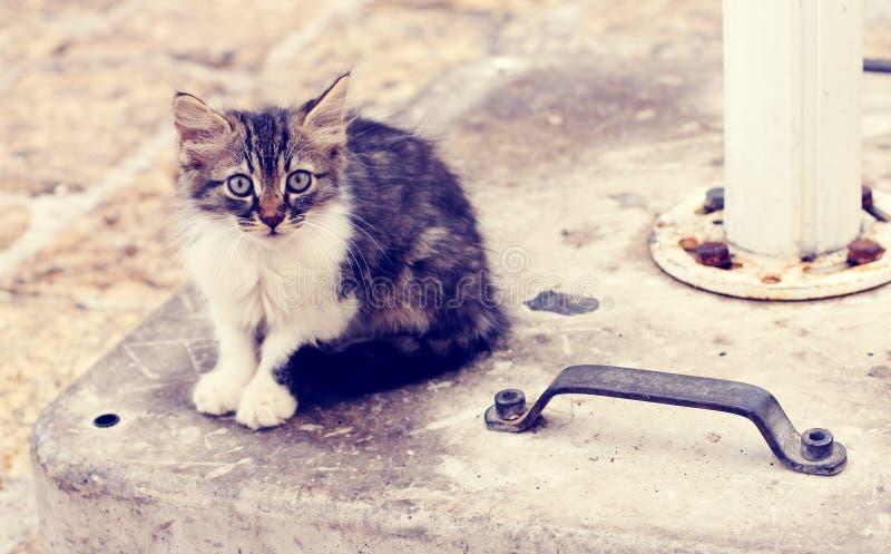 Унылый маленький бездомный котенок стоковое изображение rf