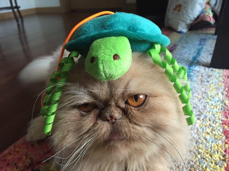 Унылый персидский кот стоковое изображение rf