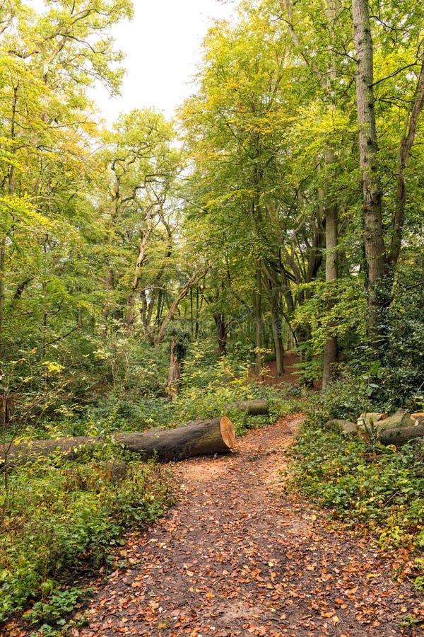 Упаденное дерево полесья, холм волынщиков, Вустершир стоковое фото