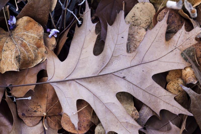 Упаденные высушенные листья осени на земле несколько типов стоковое изображение