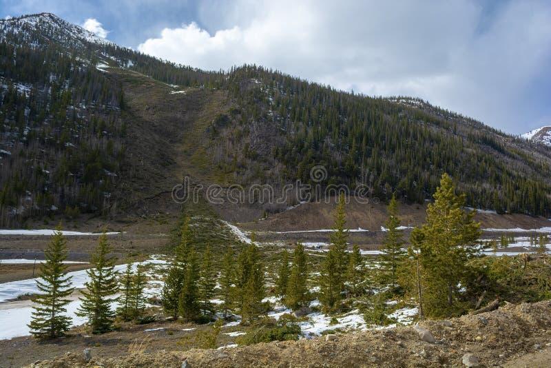 Упаденные деревья и остатки лавины горы стоковые изображения