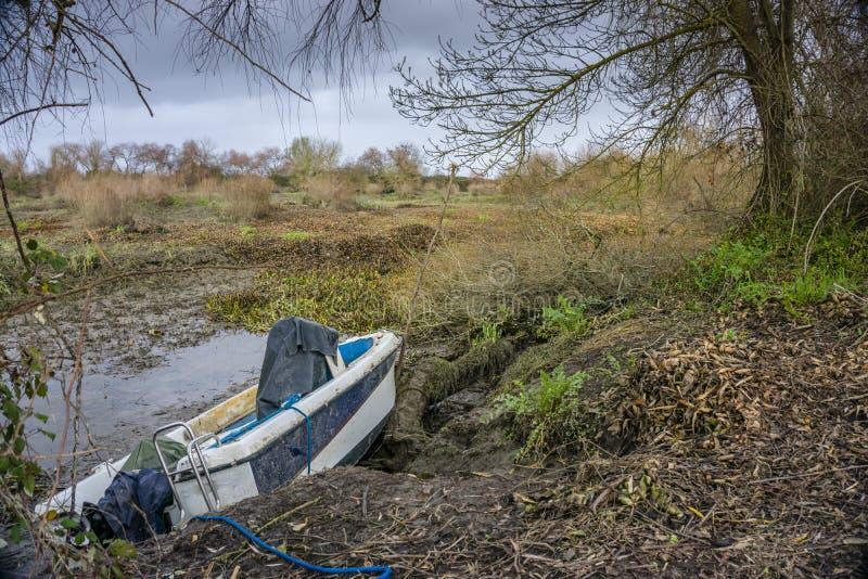 Упаденные деревья на банках реки tejo реки в Salvaterra стоковое фото rf