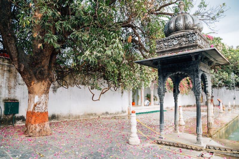 Упаденные лепестки и большое дерево на саде Saheliyon Ki Бари девушек в Udaipur, Индии стоковые фото