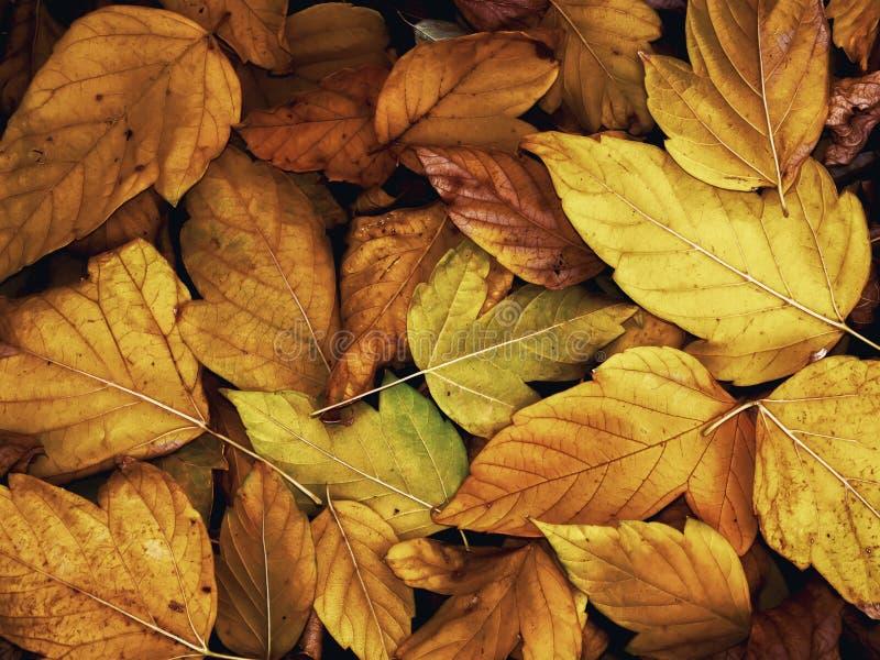 Упаденные листья желтого цвета в конце осени стоковое изображение