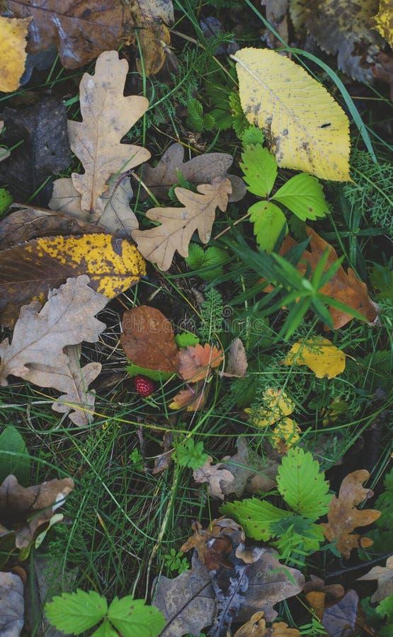 Упаденные листья желтого цвета на траве осени стоковые фото
