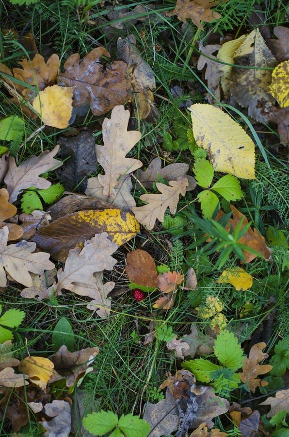Упаденные листья желтого цвета на траве осени стоковые изображения rf